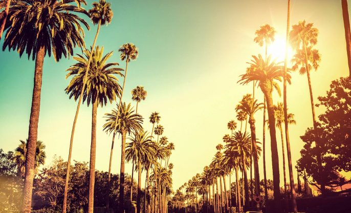 Palmbomen in Hollywood