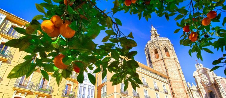 Valencia-Spain-Plaza-de-la-Reina-with-Orange-Tree-shutterstock_548069473